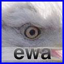 EWA Affiliate Network