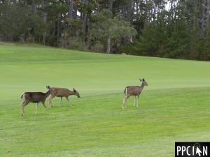 Spyglass Pebble Beach Golf Course
