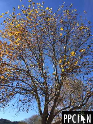Segmentation Tree